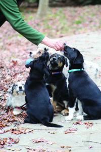 How To Supervise Good Puppy Play
