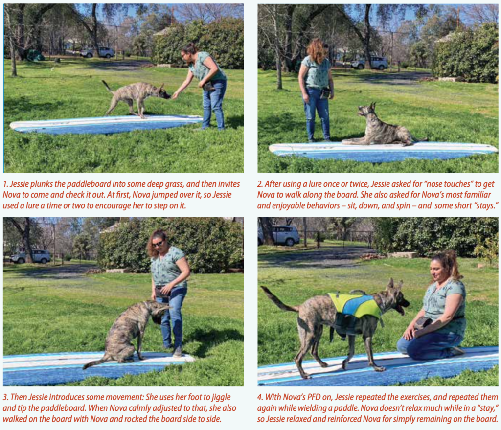 Dry-Land Training: An Important Step for Safe Paddling with Your Dog
