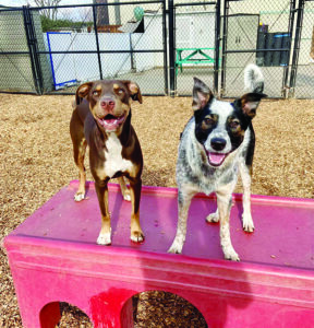 Dog Daycare: What You Should Look For
