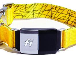Fi Smart Dog Collar