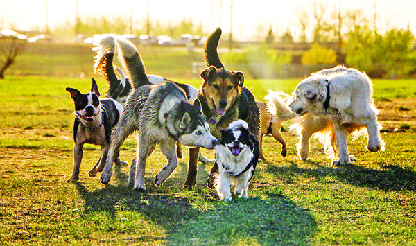 5 Tips for Avoiding Fights at the Dog Park