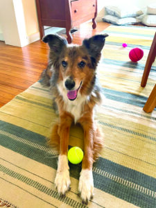 Help with Palliative or Hospice Care for Your Dog