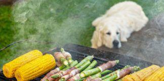 Can Dogs Eat Asparagus?