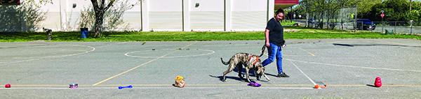 Beyond Basic Dog Training