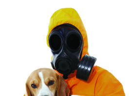 Why Does My Dog Stink?