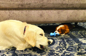 5 Tips for Introducing a New Puppy to your Dog
