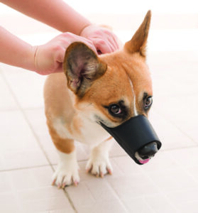 Dog Muzzles: When To Use Them and How