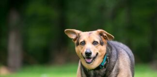 signs of pancreatitis in dogs