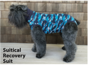 Dog Recovery Suits Review