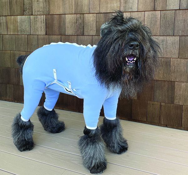 dog recovery suits