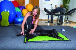 Dog Massage Instruction