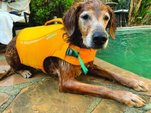 Dog Life Jacket Review