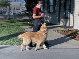 leash walking