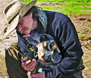 Dog Wound Care