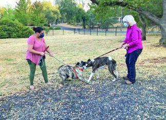 dog on leash greeting